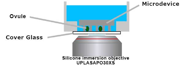 Figure 7: Schematic illustration of microdevice imaging with a silicone immersion objective.