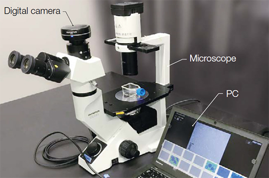 The CKX41microscope, DP27 digital camera, and CKX-CCSW software.