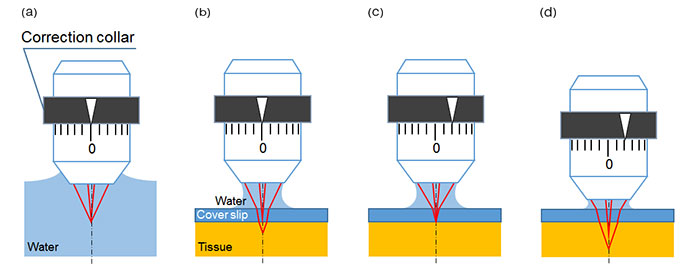 Schematic figures of spherical aberration caused by cover-glass or tissue and the effect by correction collar adjustment.
